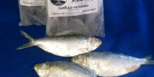 Thread Herring