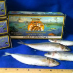 1440-Cigar-Minnows-1_700sq