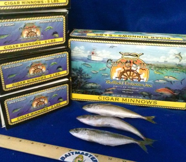 1442 Cigar Minnows 5