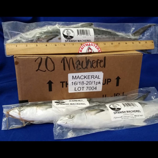 7004_Mackerel_700sq