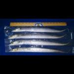 7500 Ribbonfish_700sq