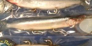 Ballyhoo – Aylesworth's Fish and Bait