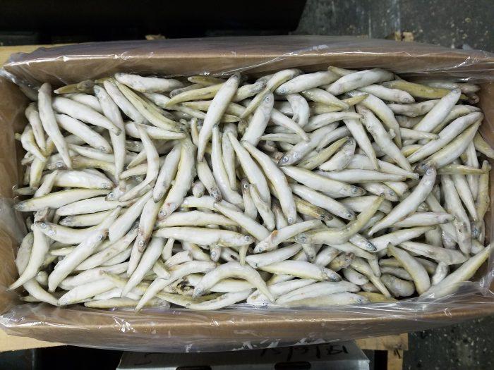 5140 – Smelt, 11lb – Aylesworth's Fish and Bait