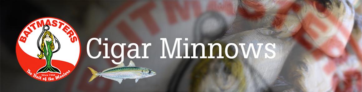 Cigar Minnows – Aylesworth's Fish and Bait