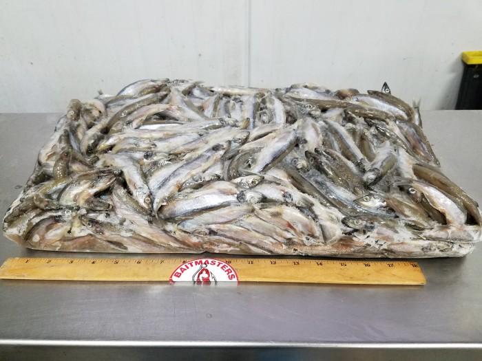 4950 – Capelin, 10 kg bulk – Aylesworth's Fish and Bait